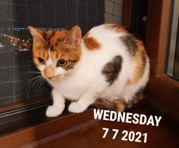 20210707_215527