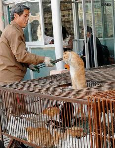 china-cats_in_meat_market2_op_466x600